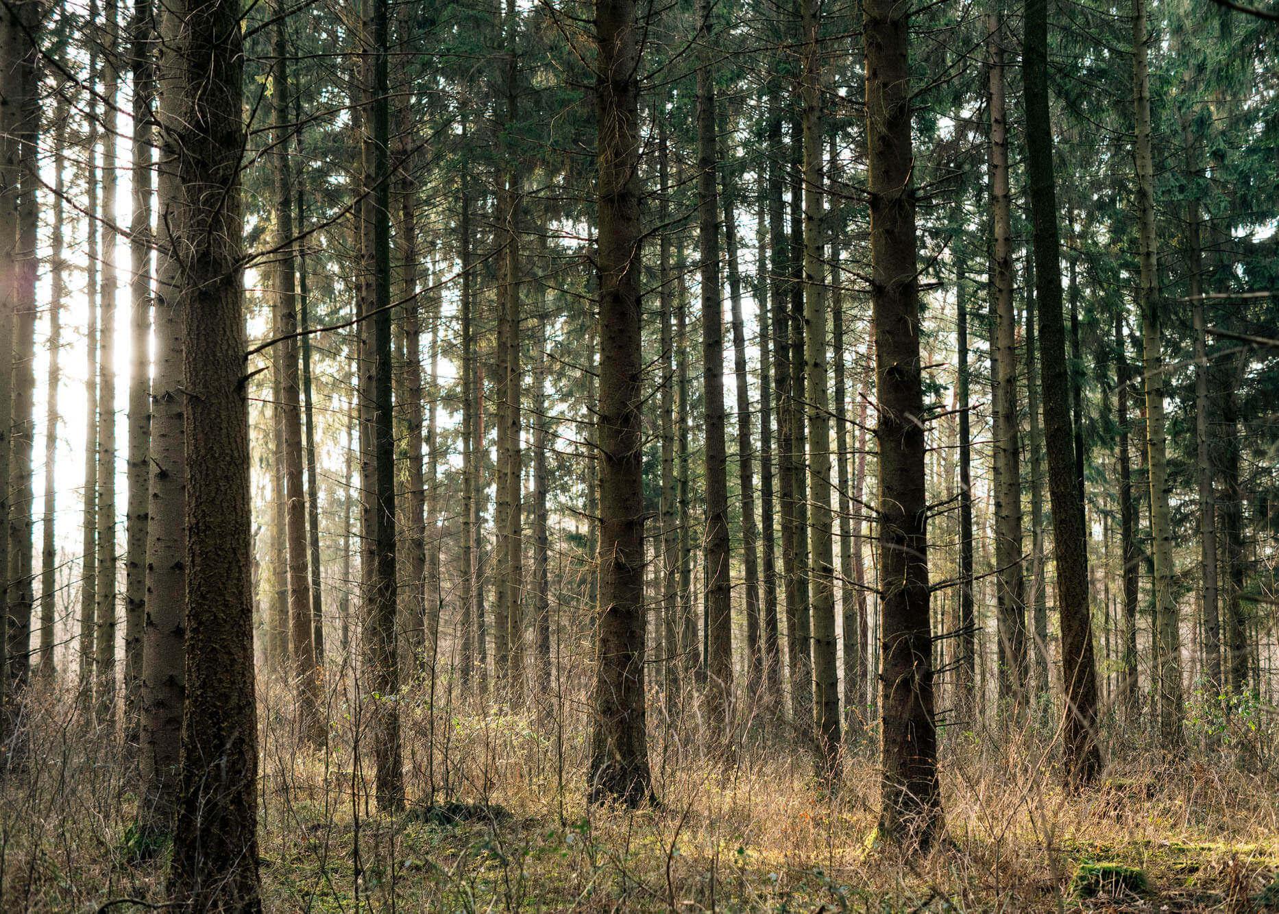 48_20180218_teens_woodlandwonderland_b_101-Kopie_1